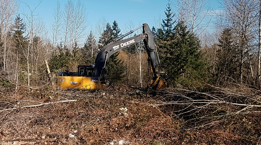 Boxwood Connector Tree Clearing